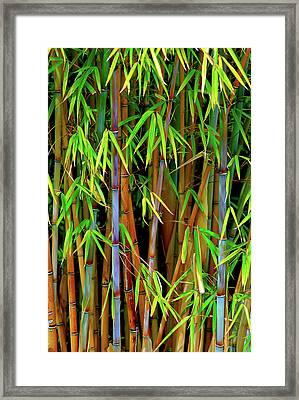 Framed Print featuring the photograph Bamboo by Harry Spitz