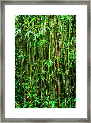 Bamboo Framed Print by Kelley King