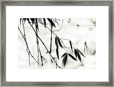 Bamboo Leaves 1. Black And White Framed Print by Jenny Rainbow