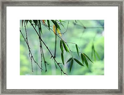 Bamboo Leaves 1 Framed Print by Jenny Rainbow