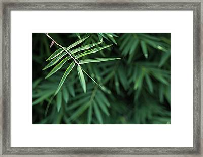 Bamboo Leaves Background Framed Print