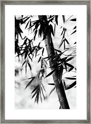Bamboo Leaves. Black And White Framed Print by Jenny Rainbow