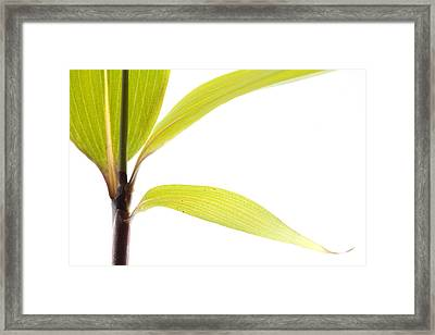 Bamboo Meditation 2 Framed Print by Carol Leigh