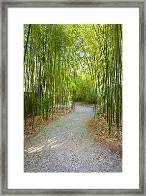 Bamboo Path 1 Framed Print by Denise Keegan Frawley