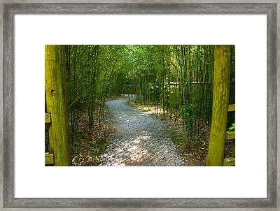 Bamboo Path 2 Framed Print by Denise Keegan Frawley