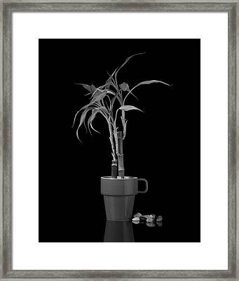 Bamboo Plant Framed Print by Tom Mc Nemar