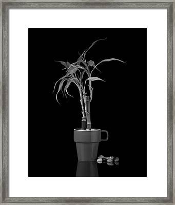 Bamboo Plant Framed Print