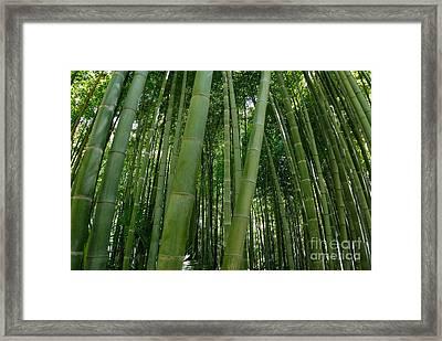 Bamboo Plantation Framed Print by Sami Sarkis