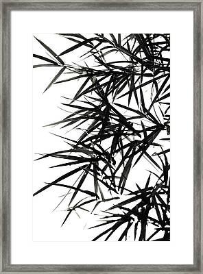 Bamboo  Poems 2 Framed Print by Jenny Rainbow