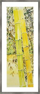 Bamboo Framed Print by Rainer Jacob