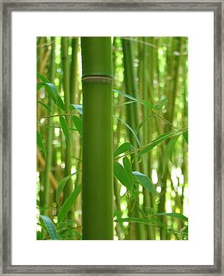 Bamboo Framed Print by Rhianna Wurman
