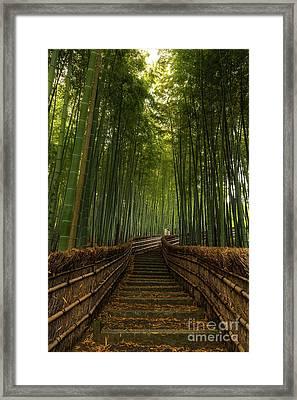 Bamboo Steps Framed Print