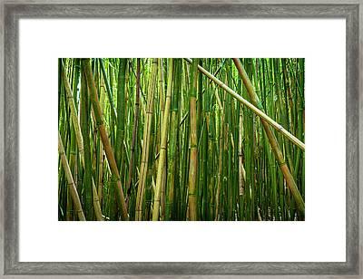 Bamboo Sticks Framed Print by Kelley King