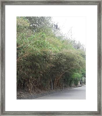 Bamboo Street Framed Print