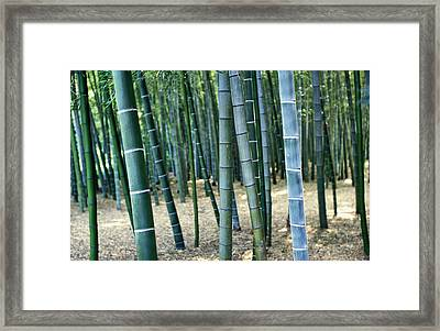 Bamboo Tree Forest, Close Up Framed Print by Axiom Photographic