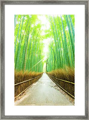 Bamboo Tree Forest Morning God Ray Straight Road V Framed Print