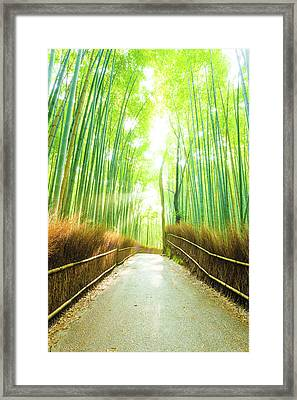 Bamboo Tree Forest Sun Light Beams Empty Road Framed Print