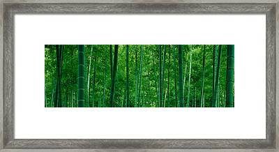 Bamboo Trees In A Forest Framed Print by Panoramic Images