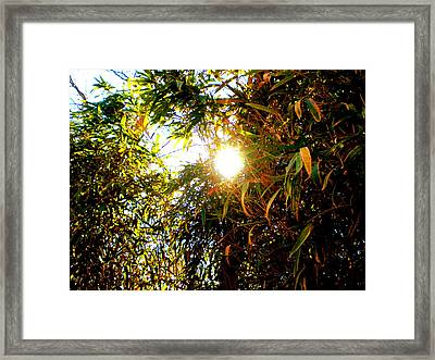 Bamboo Trees In Atlanta Framed Print by Utopia Concepts