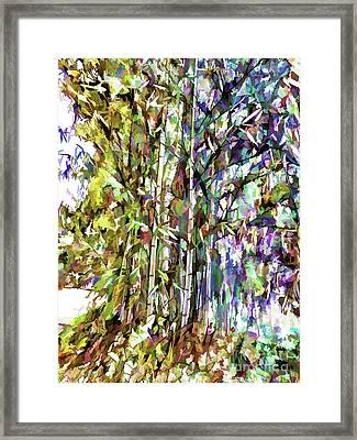 Bamboo Trees In Park Framed Print