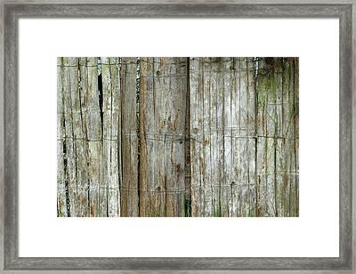 Bamboo Wood Fence Framed Print