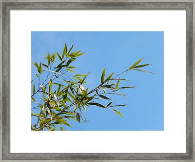 Bambous Au Ciel Framed Print