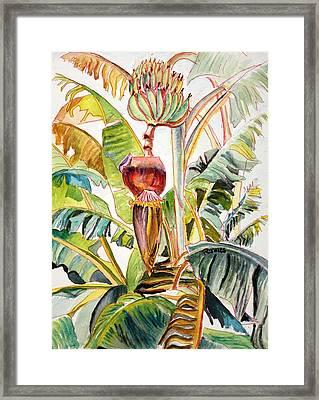 Banana Bloom Framed Print