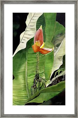Framed Print featuring the painting Banana Blossom by Alfred Ng