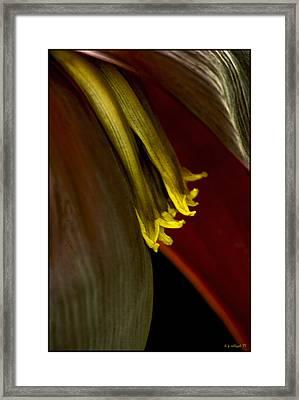 Banana Blossom Framed Print by Daniel G Walczyk