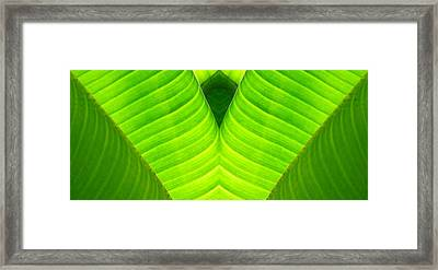 Banana Leaf Abstract 2 Framed Print