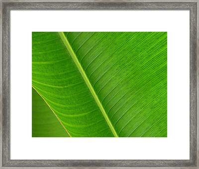 Banana Leaf Abstract Framed Print