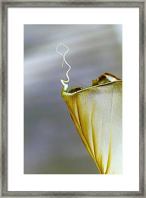 Banana Leaf Framed Print