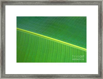 Banana Leaf Framed Print by Dana Edmunds - Printscapes