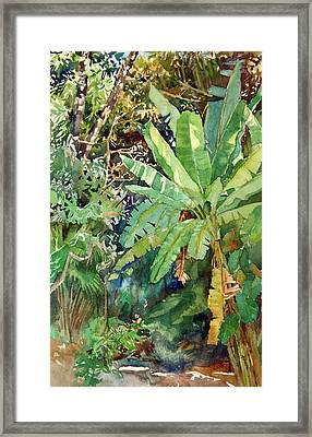 Banana Framed Print by Peter Sit