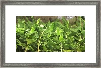 Banana Plantation Framed Print by Lanjee Chee