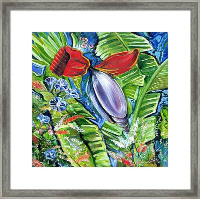 Banana Pod Framed Print by John Keaton