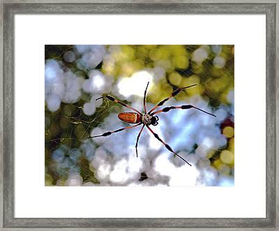 Banana Spider   1 Framed Print