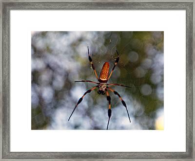 Banana Spider 2 Framed Print