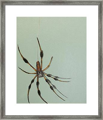 Banana Spider Framed Print