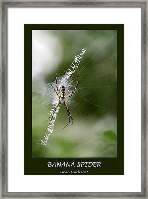 Banana Spider Framed Print by Linda Ebarb