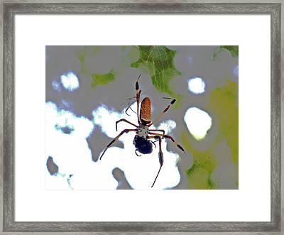 Banana Spider Lunch Time 1 Framed Print