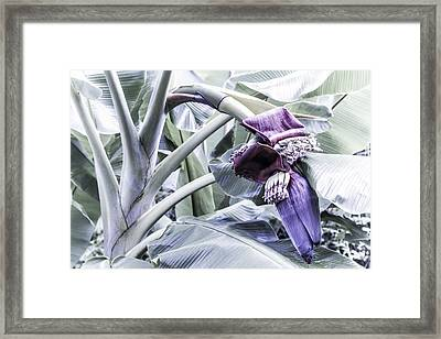 Framed Print featuring the photograph Banana Beginnings In Cool Shades by Kerri Ligatich