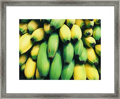 Bananas Framed Print by Happy Home Artistry