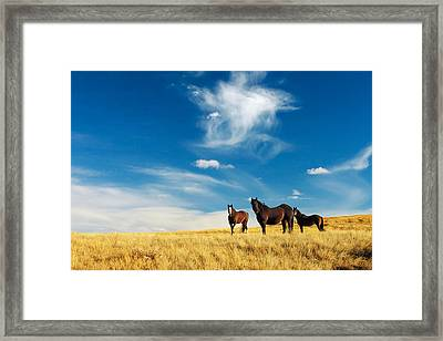 Band Of Horses Framed Print by Todd Klassy