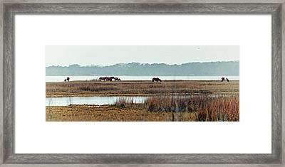 Band Of Wild Horses Along Sinepuxent Bay Framed Print