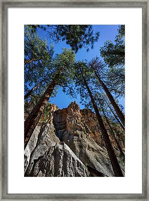 Bandelier Cliffs And Trees Framed Print by Stuart Litoff