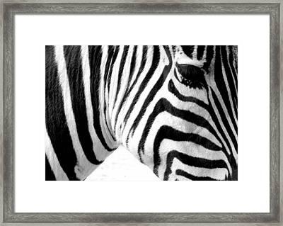 Banding Framed Print by Andrew Paranavitana