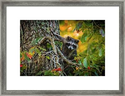 Bandit #1 Framed Print