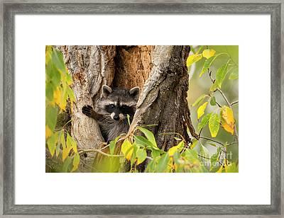 Bandit  Framed Print
