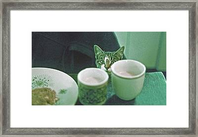 Bandit Framed Print by Laurie Stewart